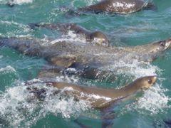 Seals up close