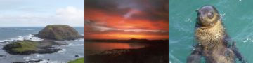 Phillip Island Australia Accommodation and trip Guide